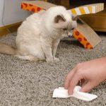 убрать запах мочи кота