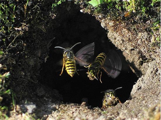 как избавиться от гнезда земляных ос