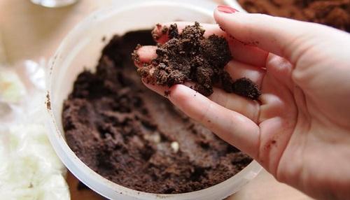 фото кофейной гущи против муравьев