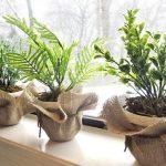 фото растений для очистки воздуха