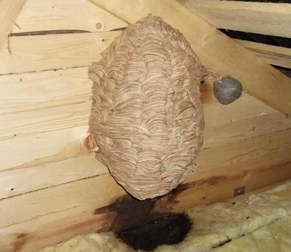 фото гнезда шершней на чердаке