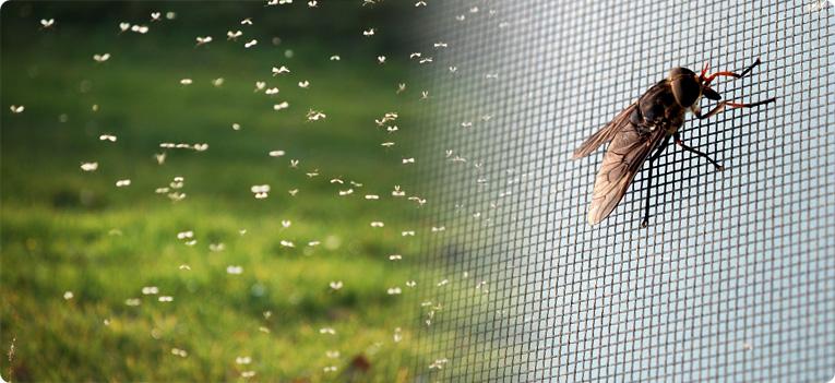 фото москитных сеток против мух