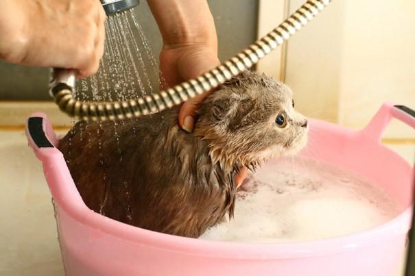 фото обработки кота шампунем от блох