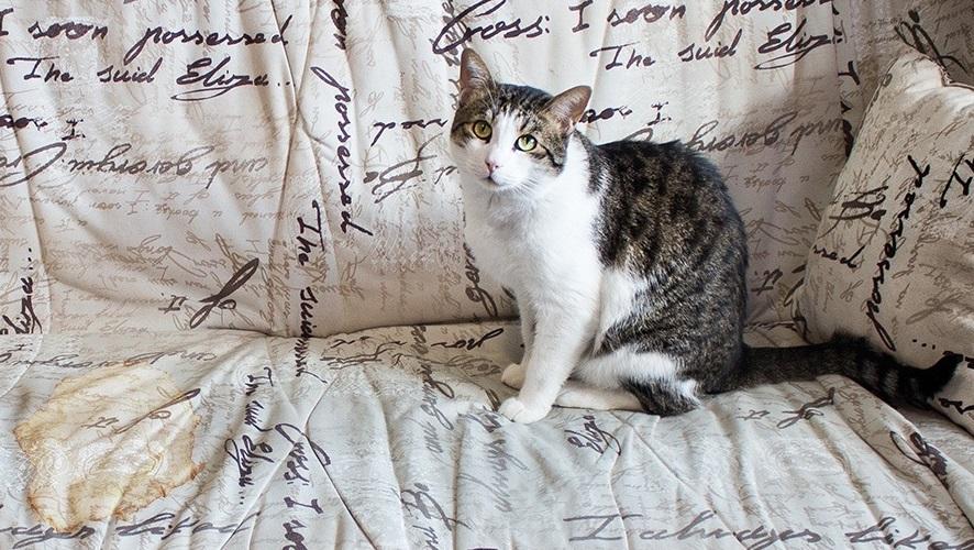 фото кошачьей мочи на диване