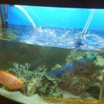 самостоятельная чистка домашнего аквариума