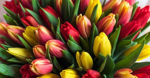 фото цветов для букета