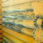 фото плесени на стенах деревянной бани