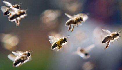способы уничтожить пчел соседа