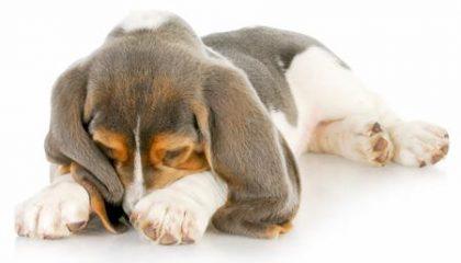чем вывести собачий запах