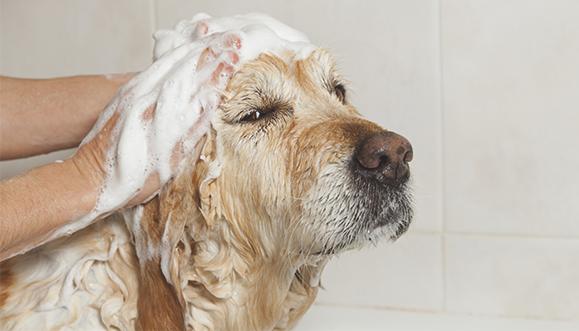 мытье против запаха псины в квартире