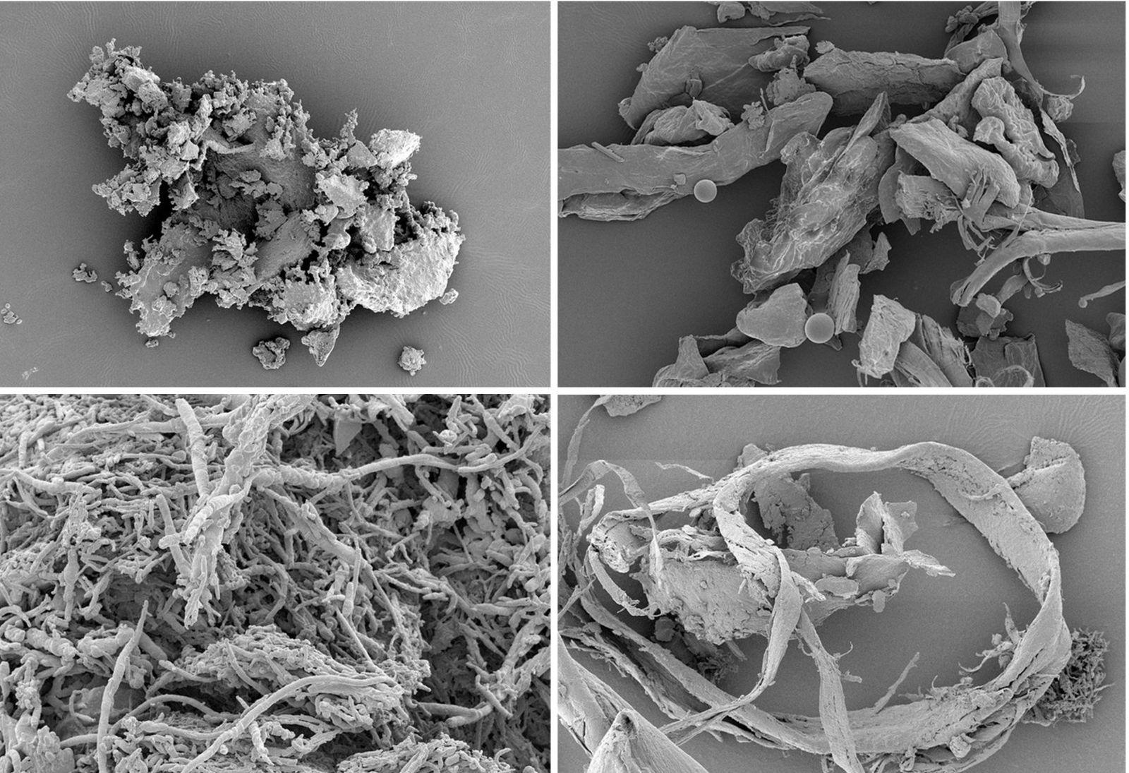 фото видов домашней пыли