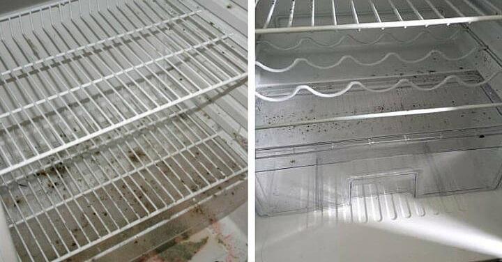 фото появления плесени в холодильнике